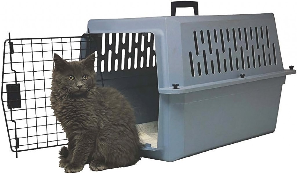catwithcarrier