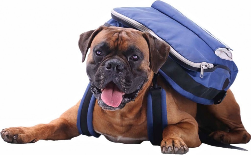 dogwithbackpack