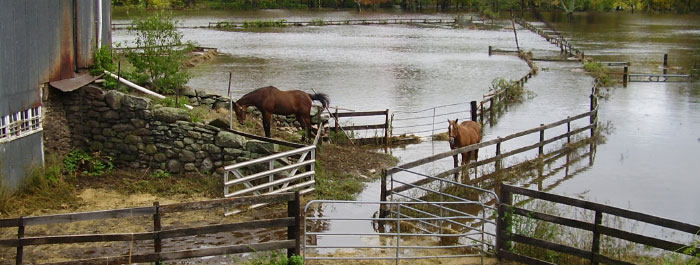 Disaster Preparedness for Horses