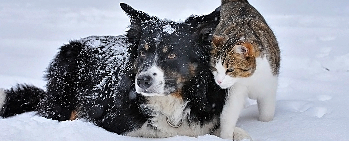 Keep Pets Safe During Dangerous Cold Weather